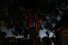 Perry Combover, Untitled, 2014. Lights, tree, window